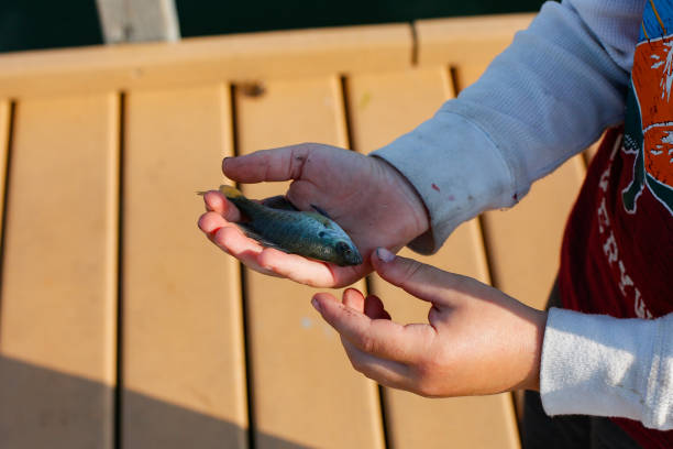 A young boy holding a small fish on a pier