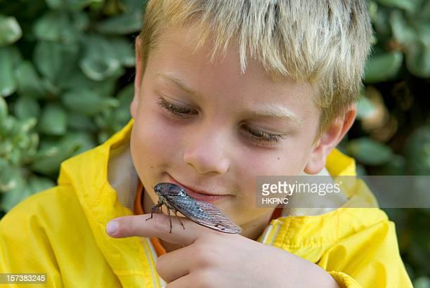 giovane ragazzo tenendo & esaminare un bug di cicada - cicala foto e immagini stock