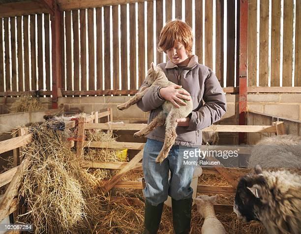 young boy holding lamb - monty rakusen stock pictures, royalty-free photos & images