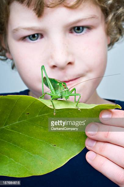 Young Boy Holding  Large Grasshopper or Locust On A Leaf