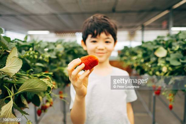 young boy holding up a strawberry - peter lourenco stock-fotos und bilder