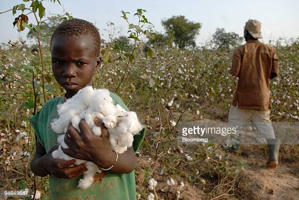 Young boy holds a bundle of harvested cotton on a farm, 125 km north of Bouake, northern Ivory Coast, on Saturday, Dec. 1, 2007. The U.S. Dollar's...