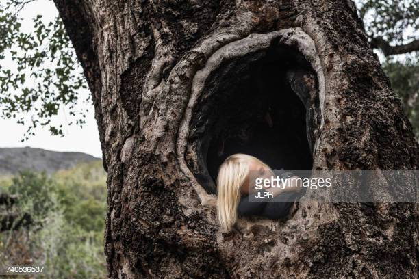 Young boy, in hollow of tree, sleeping