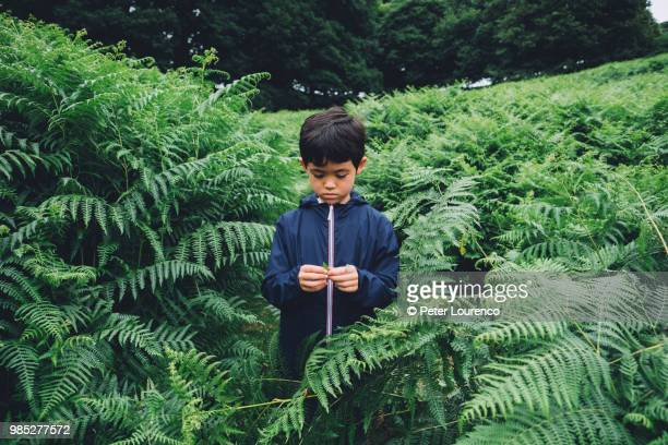 A young boy in nature scene