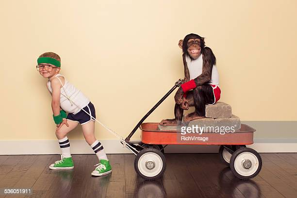young boy in retro workout clothes pulls chimpanzee - toy wagon stock photos and pictures