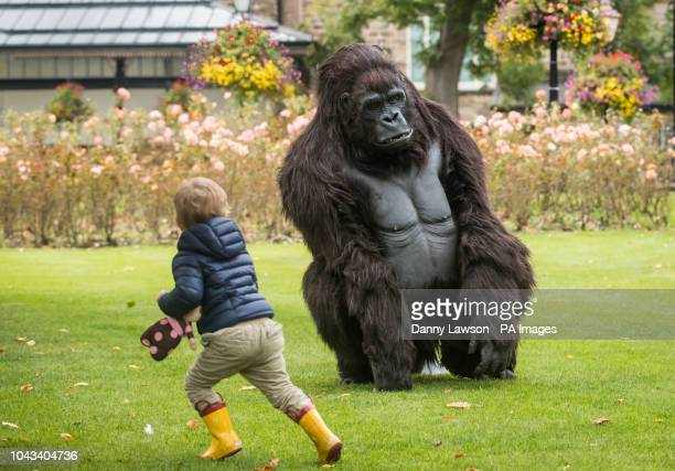 A young boy interacts with a Tourism Uganda lifesize animatronic mountain gorilla during the Wildlife amp Safari Travel Show at Harrogate Convention...