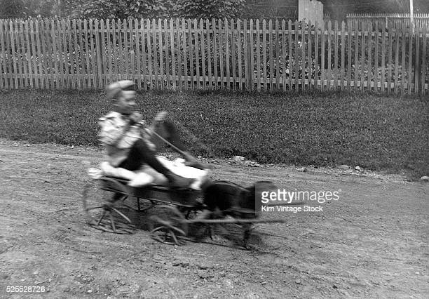 A young boy is a blur of motion in a goat cart pulled by a small dog in his backyard