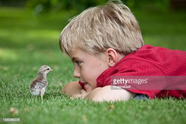 Jeune garçon en regardant bébé Chick