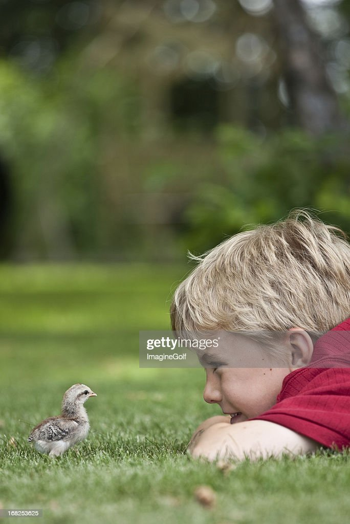 Young Boy Looking at Baby Chick : Stock Photo