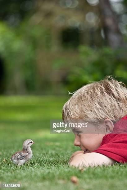 young boy looking at baby chick - chicken bird stock pictures, royalty-free photos & images