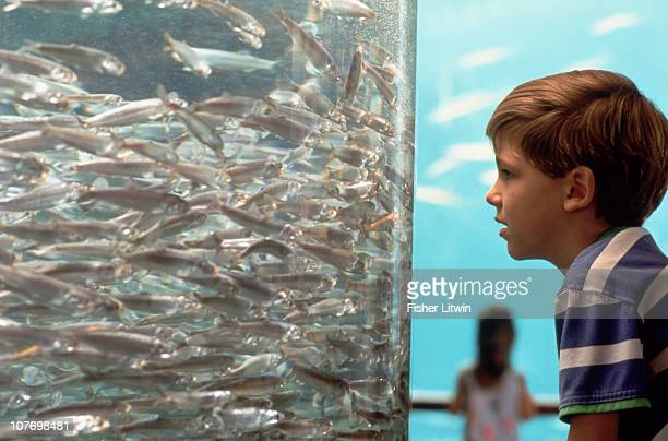 young boy looking at fish in aquarium - museo de historia natural museo fotografías e imágenes de stock