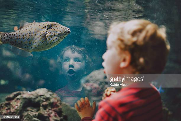 young boy looking at fish in aquarium - impressionante foto e immagini stock