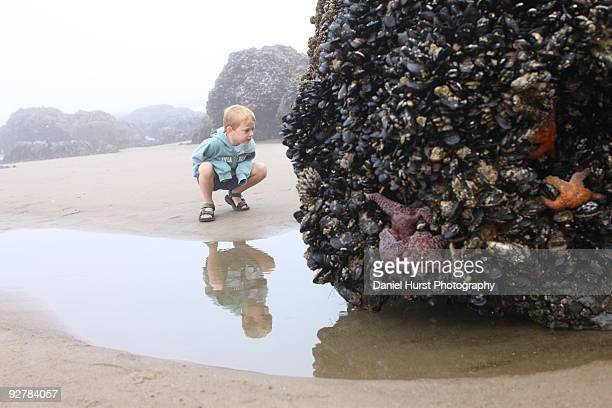 Young boy looking at sea creatures