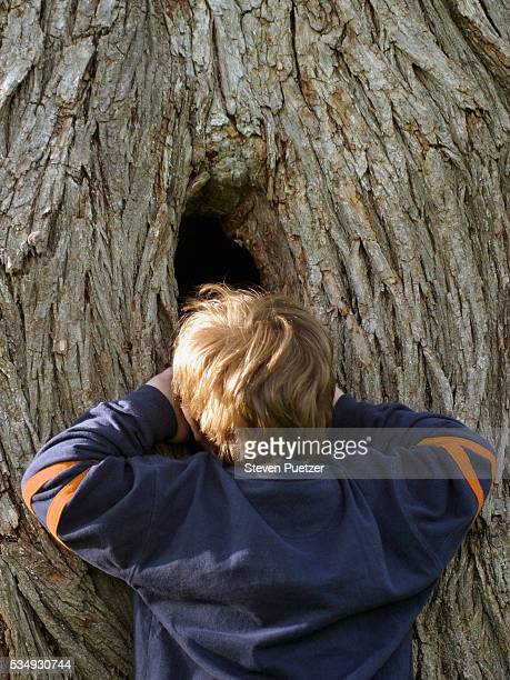young boy looking into hole in tree trunk - peeping holes ストックフォトと画像