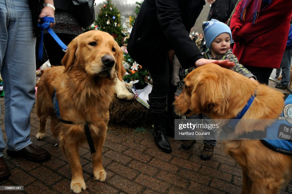 A young boy pets Abby, a Golden Retriever, as Barnabas, stands at left at a memorial to the victims of the Sandy Hook School shooting in the center of Sandy Hook Monday, December 17, 2012 in Newtown, Connecticut. The dogs were among nine therapy dogs brought to Sandy Hook from Portage, Indiana, with the Holy Cross Lutheran Church to help mourners cope with the devastating loss. Seven of the dogs were brought to a private space where the Sandy Hook students were gathered to comfort them.