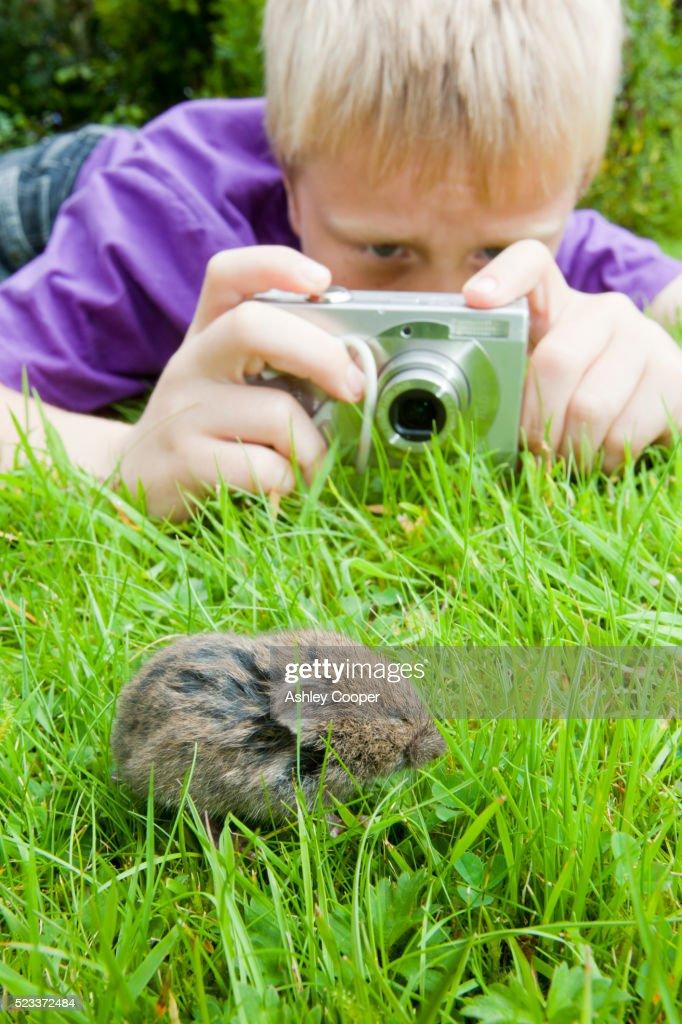 a young boy photographs a field vole on a garden lawn stock photo