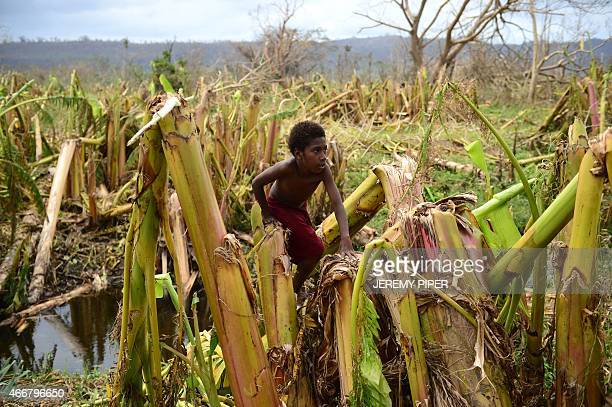 A young boy plays amongst a destroyed banana plantation in Mele outside the Vanuatu capital of Port Vila on March 19 after Cyclone Pam ripped through...