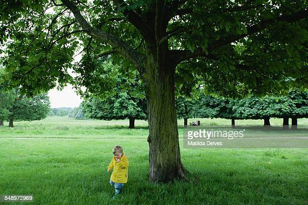 Young boy plays under a tree in Richmond Park
