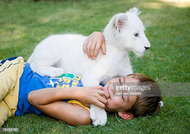 young boy plays with a white lion (panthera leo krugeri) cub on the grass. bethlehem, free state province, south africa - white lion - fotografias e filmes do acervo