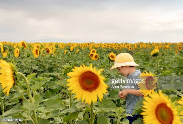 Young boy posing in a sunflower field