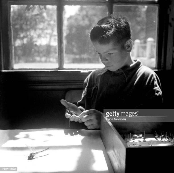 Young boy prepares an insect case in a school classroom, Traiguen, Araucanía Region, Chile, October 1950.