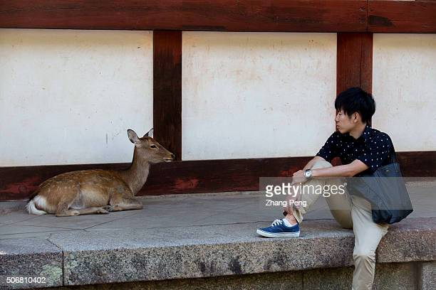A young boy rests on the stone step of a hall looking at a deer squatting on the step too Deer regarded as messengers of the gods in the Shinto...