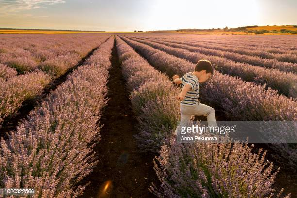 Young boy running in lavender field