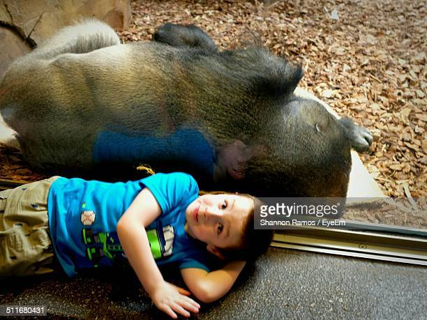 young boy sitting back to back with monkey in zoo - dierentuin stockfoto's en -beelden