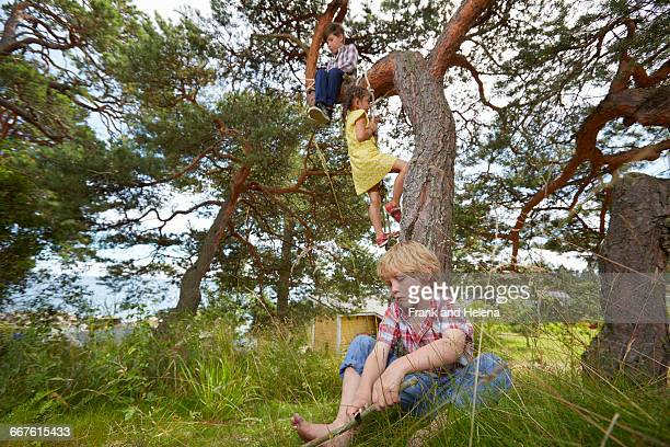 Young boy sitting in tree, young girl climbing rope ladder on tree and boy sitting in grass