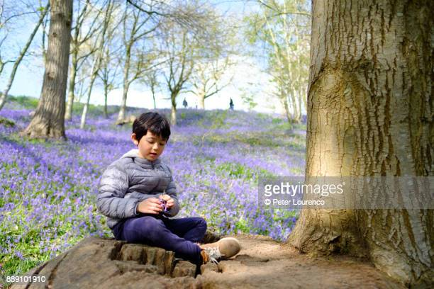A young boy sitting on a tree stump in a field of flowering bluebells.