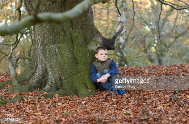 Young boy sitting under an old beech tree in Autumnal woodland
