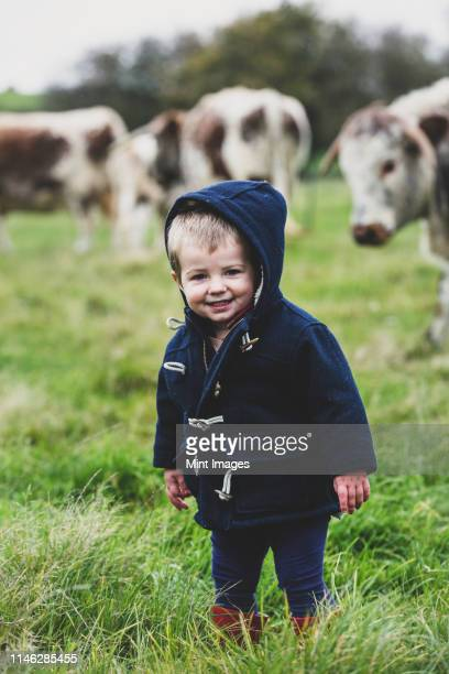 young boy standing on a pasture, with english longhorn cows in the background. - ダッフルコート ストックフォトと画像