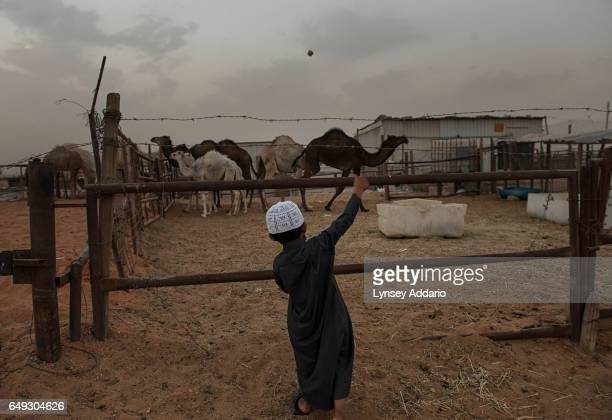 A young boy stands at a camel corral near Riyadh Saudi Arabia March 1 2013 Despite an extremely wealthy sector of society in Saudi Arabia severe...