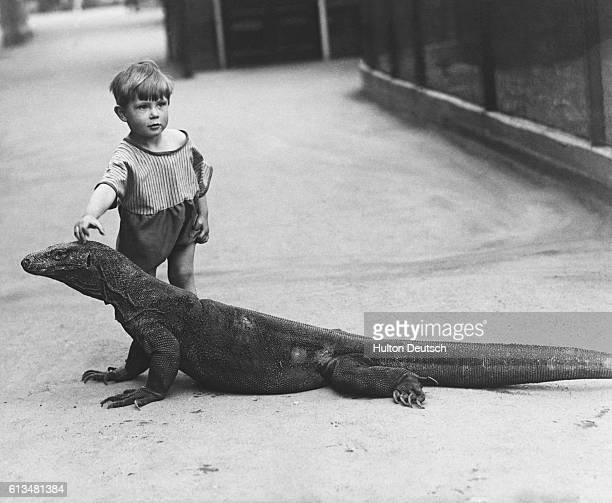 A young boy strokes the head of Sumbawa a Komodo dragon in captivity at London Zoo January 1934