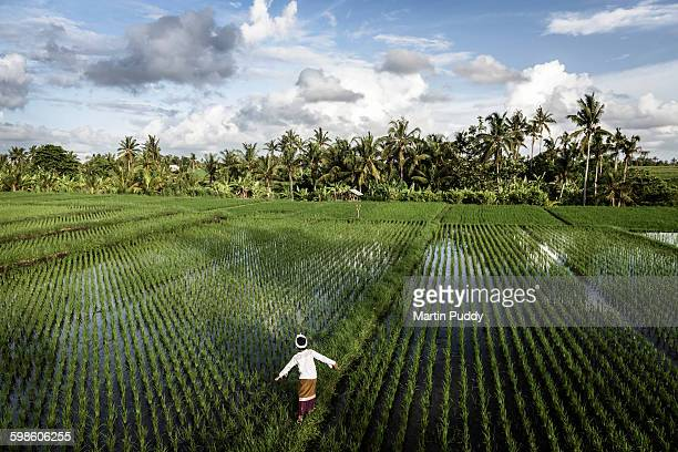 young boy walking through rice paddy field