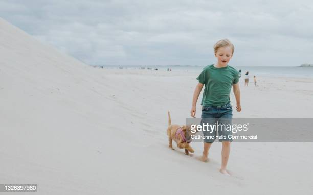 a young boy walks over soft dry sand on a beautiful beach, followed by a spaniel puppy who gazes up at him with adoration - moving after stock pictures, royalty-free photos & images