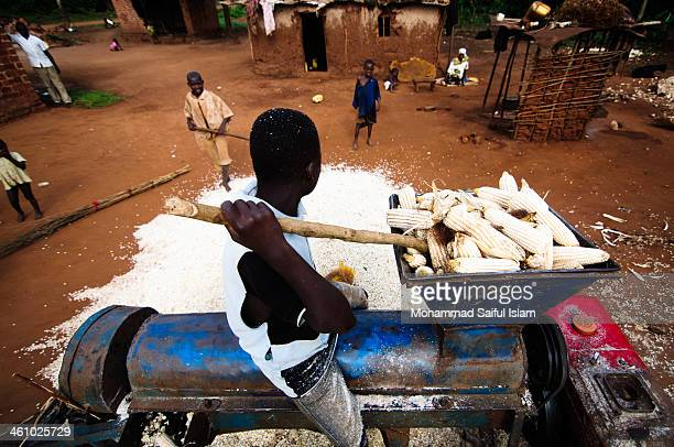Young boy was putting maize in a grinding machine in order to grind the maize for selling in the market at Jinja in Uganda. This photo was taken at a...