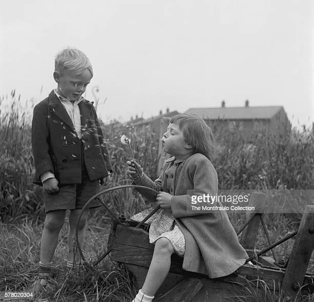 Young boy watching girl who's sitting on upside down wooden wheel barrow blowing the seeds from a dandelion flower England circa 1950