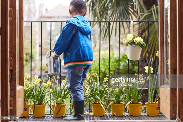 A young boy watering daffodils at Easter