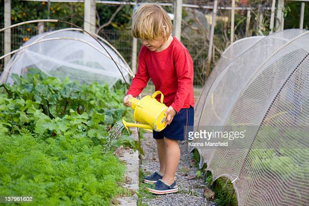 Young boy watering vegetables in allotment