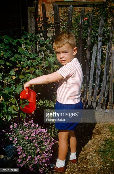 A young boy waters shrubs with a red toy watering can in the family garden on an Essex estate in the early nineteen sixties Wearing shorts and...