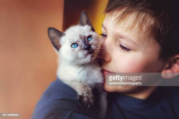 young boy with a kitten on his shoulder - siamese cat stock pictures, royalty-free photos & images