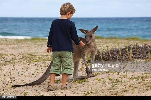 Young boy with Eastern Gray Kangaroo in Murramarang National Park