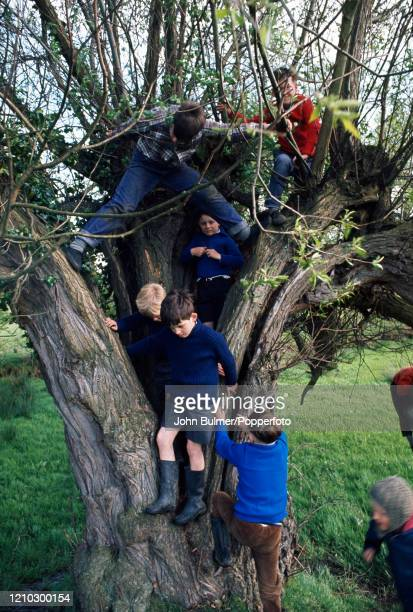 Young boys playing in the trunk and branches of a tree at Pembridge in England, circa June 1966. During the summer of 1966 British photojournalist...