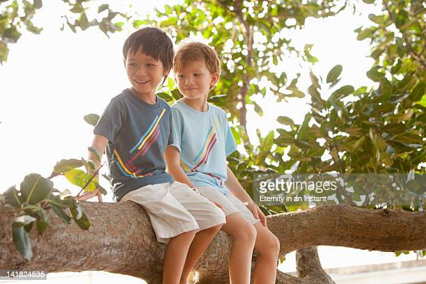 Young boys sitting in tree, smiling