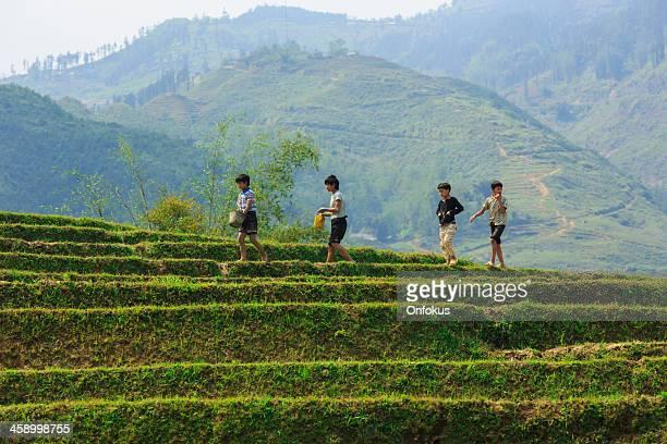 Jeune garçon marchant dans un champ de riz, du nord du Vietnam