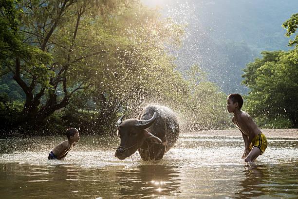 young boys washing water buffalo