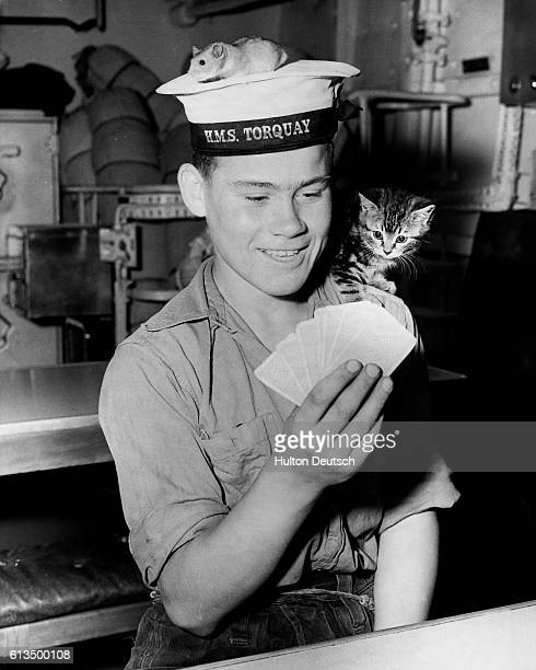 Young British Seaman plays cards while the ship's pets, 'Joey' the hamster and 'Smew' the cat, look on.