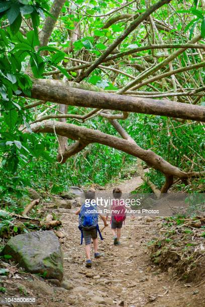 young brother and sister during hiking trip in forest - lane sisters stock photos and pictures