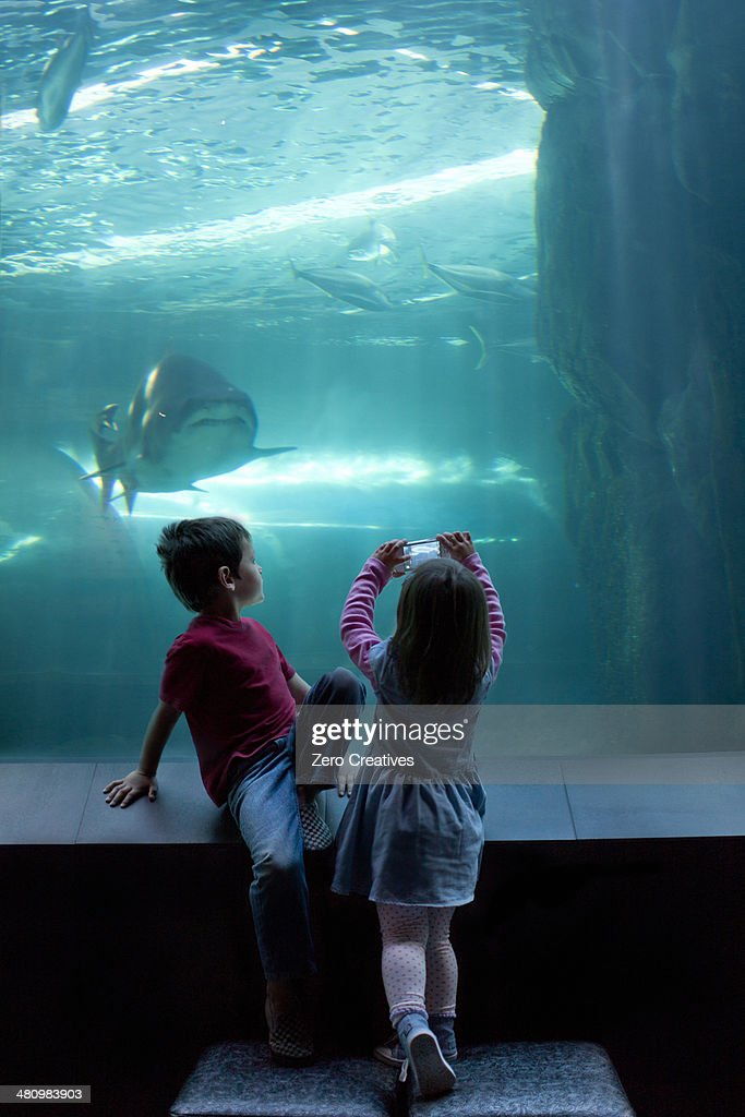 Young brother and sister photographing on camera phone at aquarium : Stock Photo